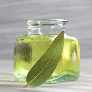 Get Fresh with the Eucalyptus Oil Market