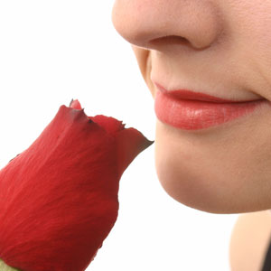 Nose smelling red rose 300