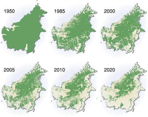 Projected deforestation in Borneo