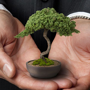 Businessman holding bonsai tree