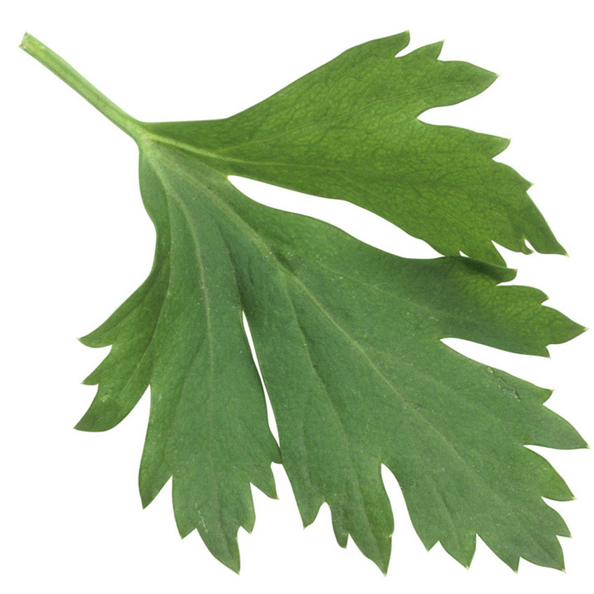 Parsley-leaf-850