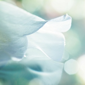 A white flower and floral background