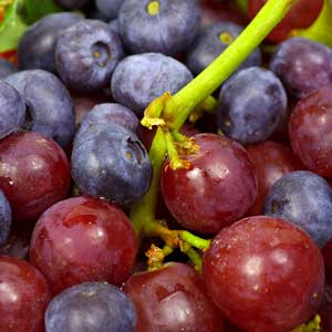 Resveratrol Launched to European Markets