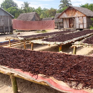 Vanilla drying